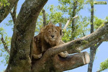 大自然に暮らす動物に会いに行こう!アフリカンサファリプラン/朝食付