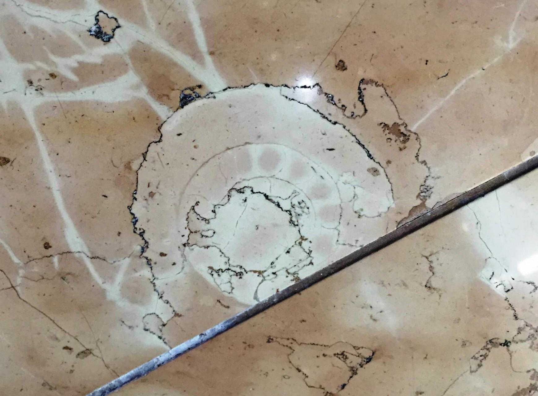 ロビー化石